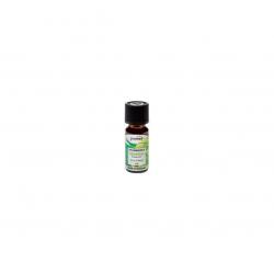 óleo CAPIM-LIMÃO